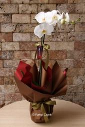 Tekli Beyaz Saksı Orkide    Onu özel hissettirecek, bulunduğu ortamı şenlendirecek bir çiçektir orkide. Sadece özel günlerde değil içinizden geldiği için de çiçek gönderebilirsiniz.. Yaklaşık Ürün Boyutu : 60 cm