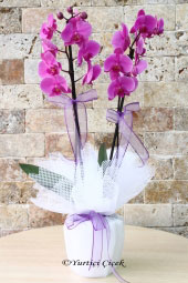 Hayat onun yanındayken daha da kıymetlenir. Göndereceğiniz mor orkide ile sevginizi anlatın. Yaklaşık Ürün Boyutu : 60 cm