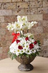 Kraton Saksı Bitkisi Gönderdiğiniz her ortamda sizi en güzel şekilde temsil edecek Kraton bitkisi ev, ofis, işyeri gibi yerlerde bakılabilir. Yaklaşık Ürün Boyutu : 40 cm