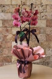 Ona göndereceğiniz rengarenk bir sabah sürprizi kadar güzel bir hediye olamaz. Cam vazoda kır çiçeği buketi ile onun yüzünde gülücükler açtırın. Yaklaşık Ürün Boyutu : 40 cm