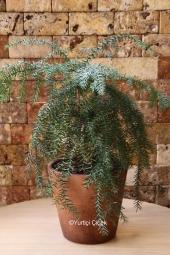 Spati Saksı Bitkisi Gönderdiğiniz her ortamda sizi en güzel şekilde temsil edecek Spati bitkisi ev, ofis, işyeri gibi yerlerde bakılabilir.
