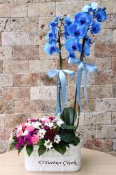 Çift Dallı Mavi Orkide ve Yanında Kır Çiçeği Aranjmanı ile Farklı ve Özel Bir Sürpriz Yapma Fırsatı Sadece Bir Tık Uzağınızda!