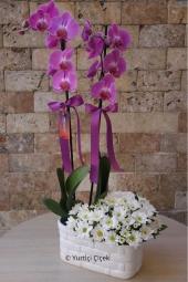 Beyaz Lilyum Çiçeği : 5 Adet,Mor Orkide : 1 Adet   Beyaz seramiğe mor orkide ve kokulu beyaz lilyumlardan hazırlanmış aranjman sevdiklerinize özel olduklarını hissettirecek.