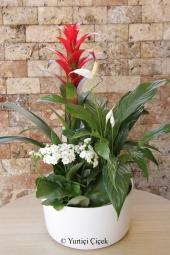 Guzmanya, Spati ve Kalanşo   Saksı çiçeklerinden hazırlanan bitki aranjmanı ile sevdiklerinize mevsimin en güzel çiçeklerinden harikalar yaratın.