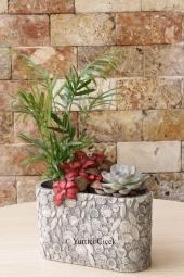 Tillandsia bitkisinin anlamlı ve büyülü dünyasını sevdiklerinize en özel sürpriz olarak göndermek istiyorsanız doğru yerdesiniz!