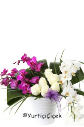 En Özel Anlara Ponsetya Saksı Çiçeği Hemen Gönderme Fırsatı Yaşam Alanlarımıza Canlılık Katın. Boyu : 40 cm