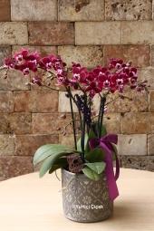 Sevdikleriniz için en güzel ve en taze çiçekleri sizin için hazırlıyor, mutluluk dolu birer sürpriz olması için gönderiyoruz.