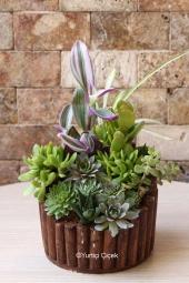 Özel kabak şeklindeki camda 5 çeşit sukulent ile hazırlanan teraryum sevdiklerinizin masaları için özel bir hediye olacaktır.