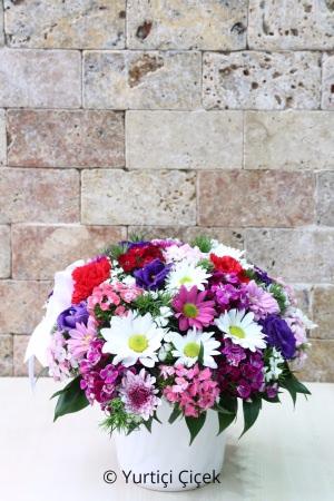 Mevsim Kır Çiçekleri
