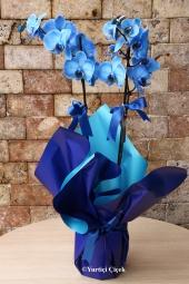 Mavi Orkide    Sevginin ve masumiyetin sembolu mavi orkide sevdiklerinizin ev, iş yeri, ofis gibi ortamlarına renk katacak harika bir hediye olacak. Yaklaşık Ürün Boyutu : 60 cm