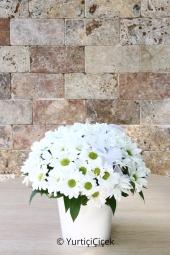 Beyaz düşlerinizi yansıtacak gönlünüzün aynası beyaz papatyalardan aranjman sevdiklerinizin güzel bir güne merhaba demesi için harika bir hediye. Yaklaşık Ürün Boyutu : 30 cm