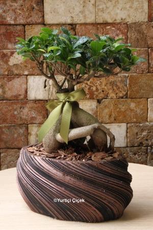 Özel Bonsai Bitkisi