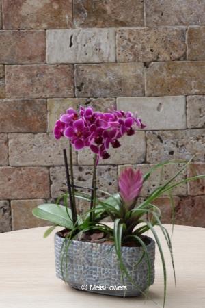 Mini Orkide Serisi 1