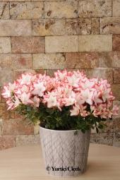 Özel taş seramikte rengarenk bahar çiçeklerinin en güzelleriyle hazırlanan aranjman sevdiklerinizi gülümsetecek bir hediye olacak.