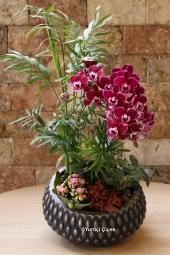 Benjamin Saksı Çiçeği   Gönderdiğiniz her ortamda sizi en güzel şekilde temsil edecek benjamin bitkisi ev, ofis, işyeri gibi yerlerde bakılabilir.