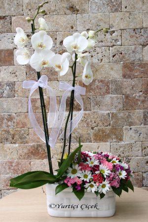 Orkide ve Kır Çiçekleri